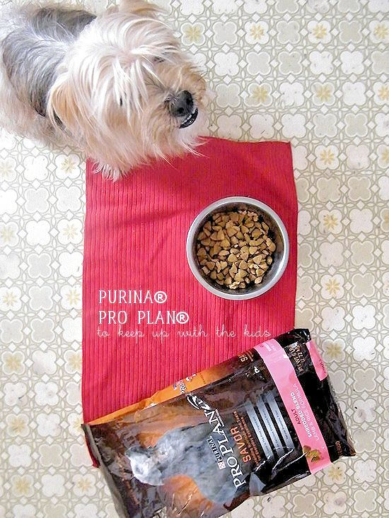 Purina® Pro Plan® and a DIY Catch Toy for your pup made out of old denim - diy dog toy, fetch toy, dog chew toy, denim bone idea #ProPlanPet #ad